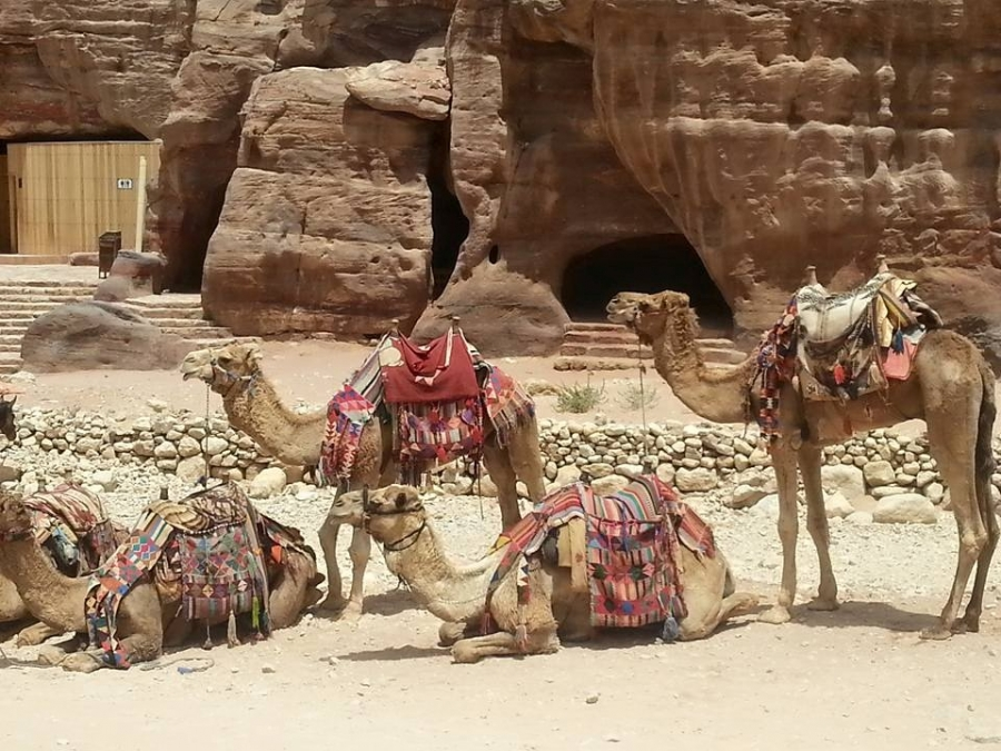 Yes, we also provide private tours to Jordan!